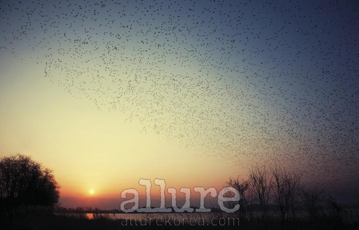 서해는 가장 먼저 해가 지는 곳이다. 갈대밭과 바람, 바다, 노을, 철새가 마주치는 순간.