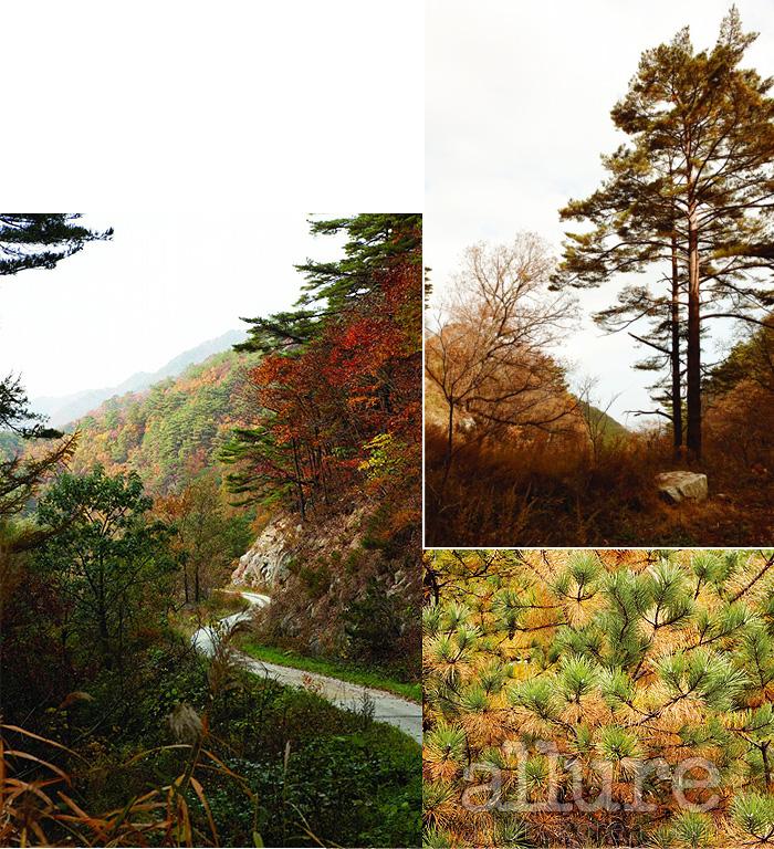 전국적으로 걷기 열풍이 일고 있다. 지방마다 경쟁하듯 둘레길을 만들고 있지만 지역의 생태와 문화에 대한 고려 없이 무분별하게 길만 만든다는 느낌도 배제할 수 없다. 금강소나무숲길은 인위적인 개발을 최소화해 있는 그대로의 길을 보여준다. 덕분에 사계절의 변화를 오감으로 느낄 수 있으며 길을 걷는 동안 책임 여행에 대한 의미를 스스로 깨우칠 수 있다.