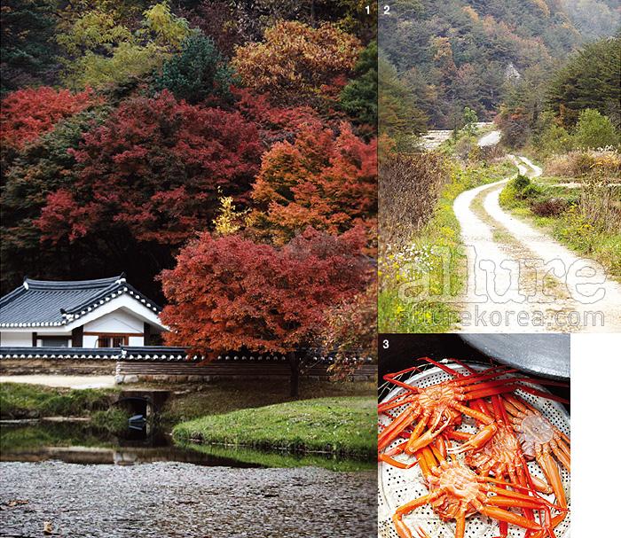 1. 늦은 가을을 맞이한 불영사는 색색의 단풍으로 조화롭게 물들어 있었다. 2. 불영계곡으로 오르는 길은 굽이굽이 꽤 멀리까지 이어진다. 그 길의 초입에서만난 작은 오솔길. 3. 울진 붉은 대게를 제대로 즐기고 싶다면 '붉은 대게 축제'를찾는 것도 좋을 듯.