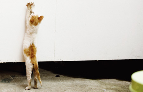 개와 고양이의 나날