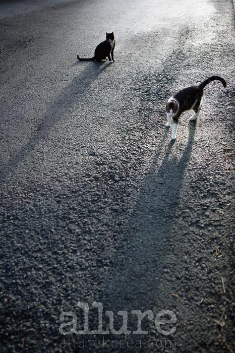 사진작가 이규열이 스위스에서 만난 길고양이들.