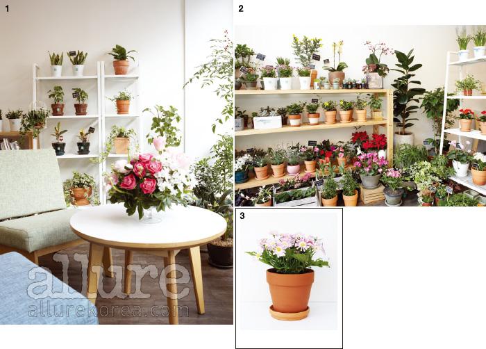 1. 커다란 창을 마주하고 있는 테이블. 2. 온통 하얀 벽면에 수없이 많은 꽃과 화분이 진열되어 있다. 덕분에 꽃의 컬러가 더욱 화사하게 느껴진다. 3. 에이프릴 샤워가 추천하는 시네나리아.