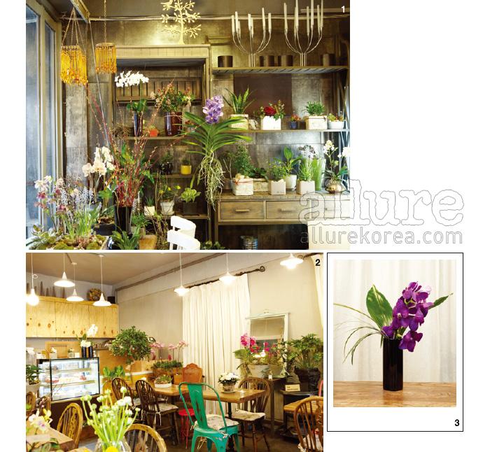 1. 꽃과 식물이 조화롭게 자리하고 있는 그로브. 센스 있는 화분 셀렉션이 꽃을 더 돋보이게 한다. 2. 아늑하고 화사한 카페 분위기 덕분에 유독 여자 손님이 많이 찾는다. 3. 그로브가 추천하는 서양난 반다라