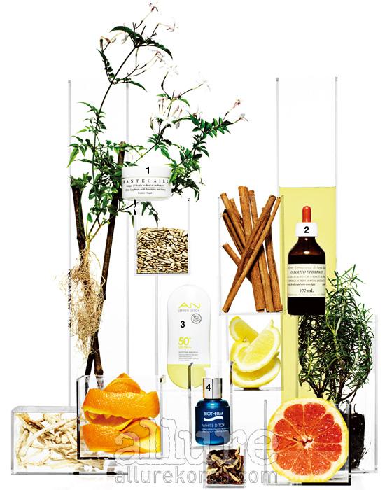 레몬과 오렌지, 자몽은 대표적인 데톡스 성분이 함유된 과일이다. 이 밖에도 재스민,해바라기씨, 계피, 로즈메리,도라지와 대추 역시 피부와 몸속의 독소를 정화하는 데 도움을 준다. (왼쪽부터) 1. 샹테카이의 데톡스 클레이 마스크 위드 로즈마리 앤 허니. 자극 없이 피부를 정화하면서 손실된 미네랄을 재충전하는 마스크 50ml 12만1천원. 2. 산타 마리아 노벨라의 올리오 디 이페리코. 피부 트러블, 알레르기, 선번 등에 효과가 있는 천연 치료 세럼100ml 5만8천원.3. 보브의 AN 레몬 데톡스 선프리. 피부 속까지 정화하는 레몬 성분의 자외선 차단제 55ml 1만5천원. 4. 비오템의 화이트 데톡스 에센스. 공해, 활성 산소 같은 독소로부터 피부를 중화하는 에센스 30ml 8만9천원.