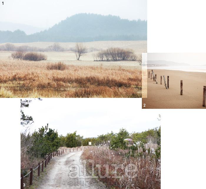 1. 갯그렁, 통보리사초 등 낯선 사구식물들이 기묘한 풍경을 선사하는 신두리 해안사구. 2. 오직 바다만이 기다리고 있는태안의 겨울 바다는 고요하기 그지없다. 3. 2011년 개통한 해변길 4코스 솔모랫길.