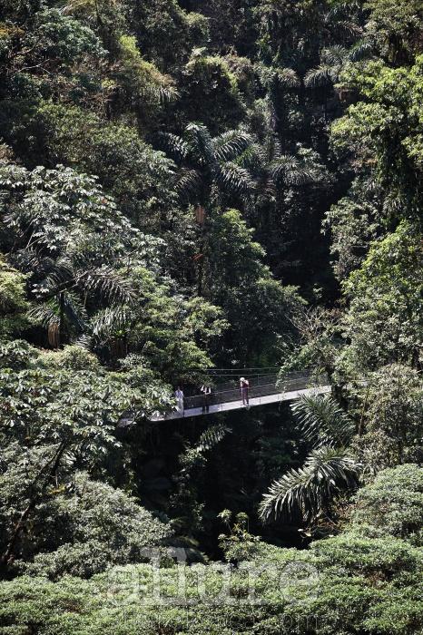 코스타리카 아레날'화산 마을'인 코스타리카의 아레날에서 밀림 트레킹에 나섰다. 에코 투어의 성지로불리는 나라답게 코스타리카의 숲은 깊고 다채롭고 강렬했다. 계곡의 양쪽을건너지르는 출렁 다리에서 바라본 숲이 멀고 아득하다. - 노중훈(여행작가)