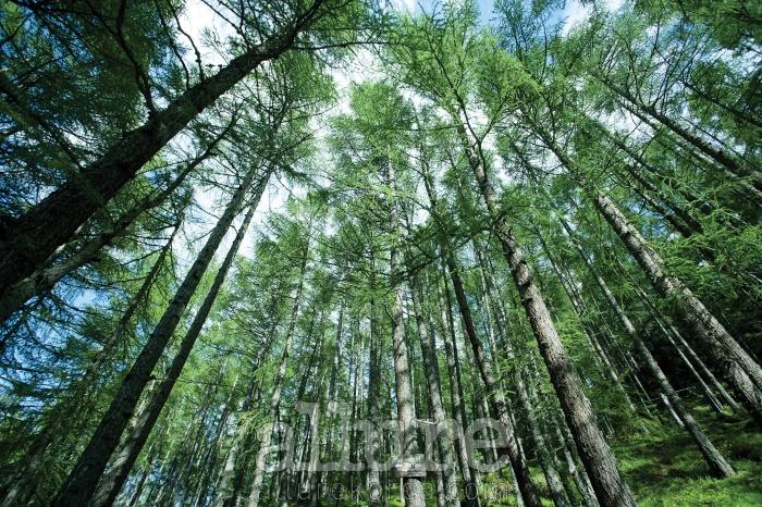 스위스 제르마트케이블카를 타고 올라갔던 어느 하이킹 코스, 그곳에서 우연히 만난 특별할 것 없는 이 숲은 잠시나마여독을 풀어주었다. 예전에는 여행을 가면 무언가 색다른 풍경을 찾으려 했지만 지금은 그저 평안하고익숙한 모습이 좋다. 이 평범한 숲처럼. - 이규열(사진가)