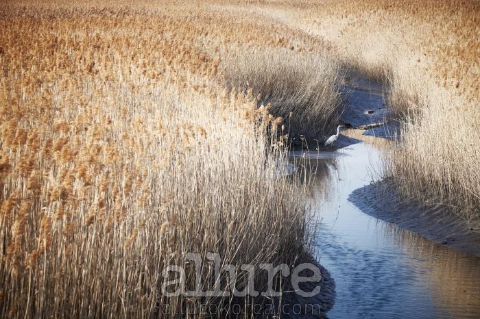 갯벌과 갈대가 어우러진 길은 왜가리를 비롯한 철새들의 휴식처다.