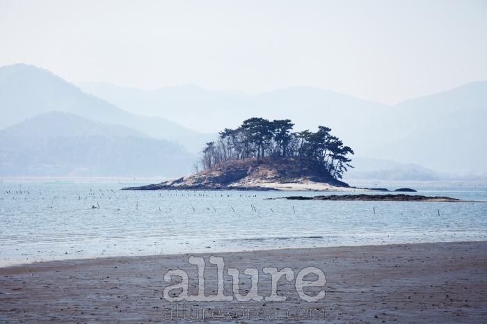 와온해변 앞에 작은 솔섬이 있다.