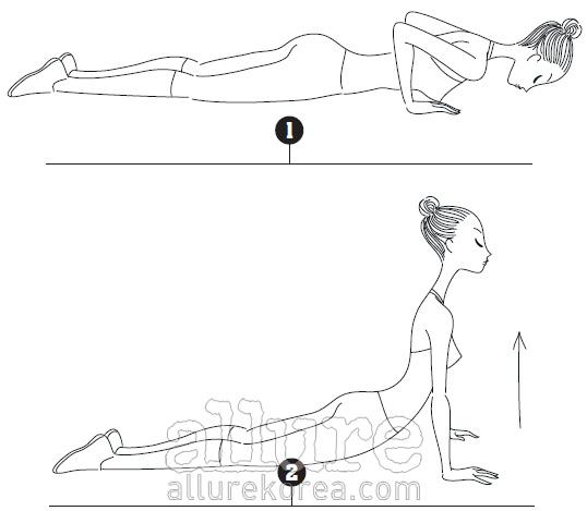 지젤라인 1 바닥에 엎드린 자세에서 양손을 들어 겨드랑이 옆에 놓는다. 머리는 몸과 일직선이 되게 들고 목을길게 뺀다. 2 숨을 들이마시며 팔과 허리의 힘으로 상체를 들어 올린다. 다시 숨을 내쉬며 아래로 내려온다. 이때어깨에는 힘이 들어가지 않아야 한다. 3~4회 반복한다.