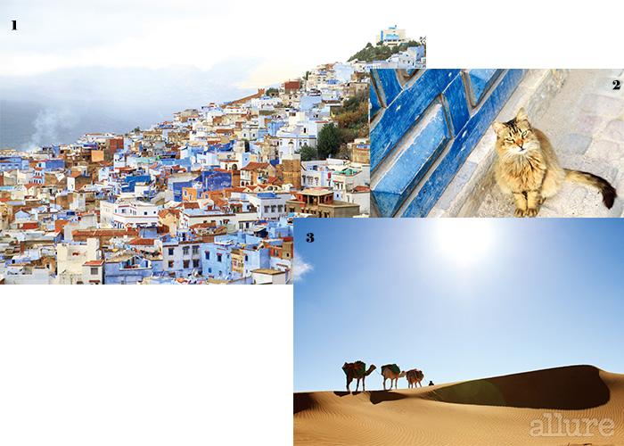 1 온통 푸르른 도시, 셰프샤우엔. 2 거리에서 자주 마주치는 길고양이. 3 사하라의 사막.