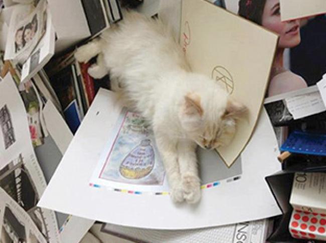 1 슈페트 컬렉션 2 칼 라거펠트의 고양이, 슈페트 3 트루사르디의 2014년 봄/여름 시즌 광고 이미지 4 이탈리아  표지에 등장한 미란다 커와 반려견 프랭키