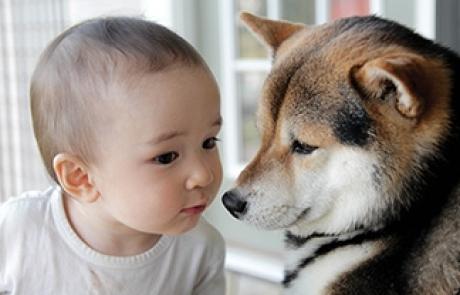 마성의 개와 고양이