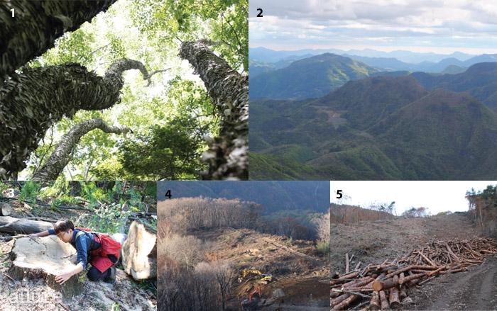 1튼튼한 기둥과 푸른이파리를 자랑했던가리왕산의 나무들.2멀리서 촬영한가리왕산의 풍경.3밑동만 남은 나무를껴안은 활동가.4벌목이한창 진행 중인 모습.5나무는 잘려나갔지만아직 땅은 살아 있다.