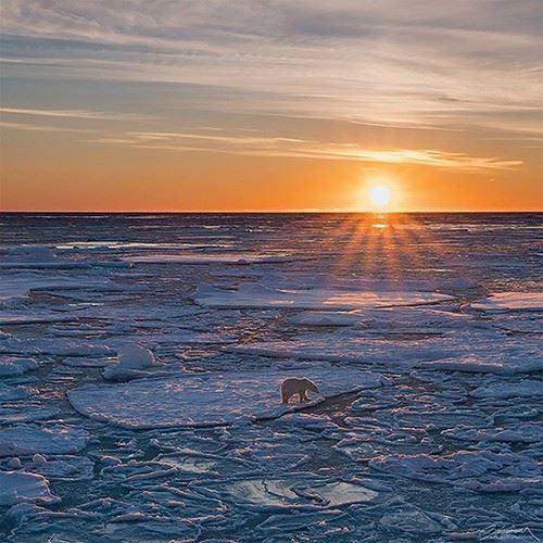 올레 살로몬슨 포토그래피 | @ARCTICLIGHTPHOTO 경이로운 자연 풍경으로 가득한 계정. 형형색색의 오로라뿐만 아니라, 북극 동물들의 모습까지 신기하고 흥미로운 요소로 가득하다.
