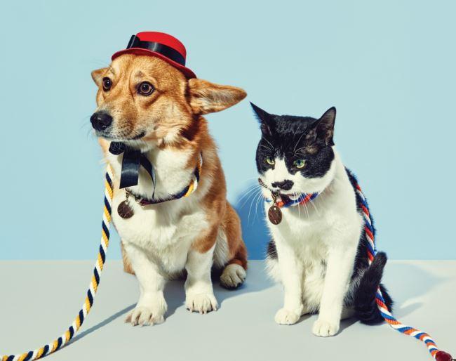 쟝고가 착용한 모자는 스타일 멍멍, 리드줄은 원오브어스.