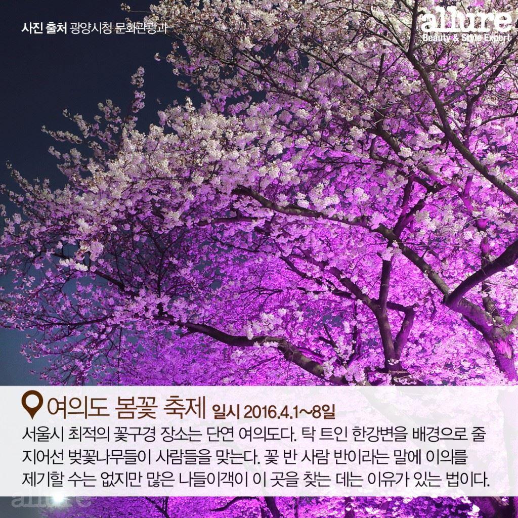 봄 바람 타고 가는 꽃 축제4