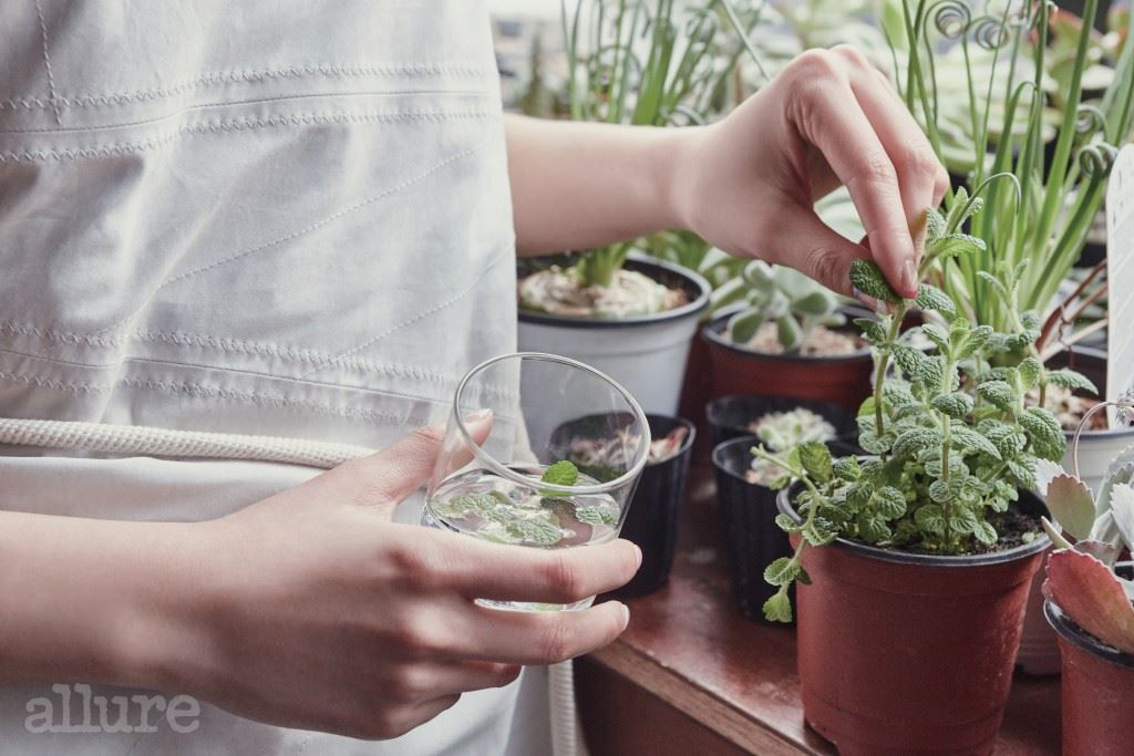 로즈메리나 민트 잎을 활용해 천연 허브티를 만든다.