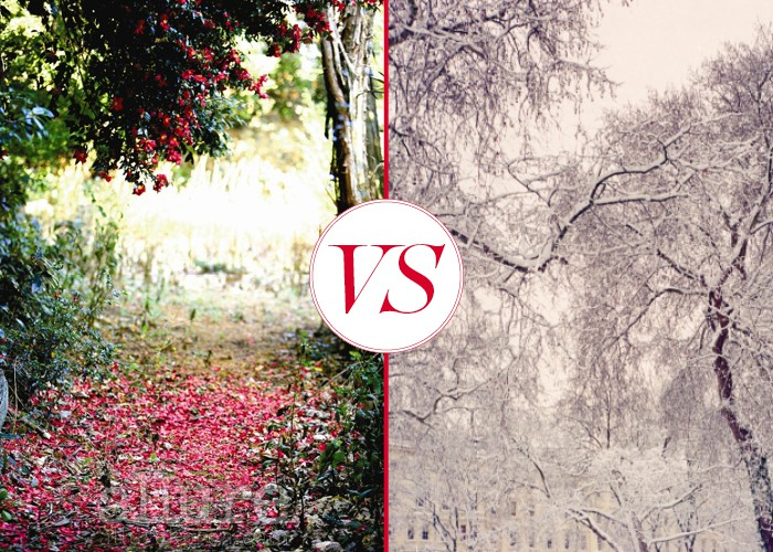 동백 vs 매화