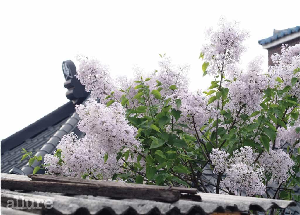 fe-꽃 따라 가는 여행2