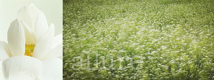 (왼쪽 부터)2007년 6월의 연꽃, 김용훈, 2009년 5월의 들꽃, 민희기