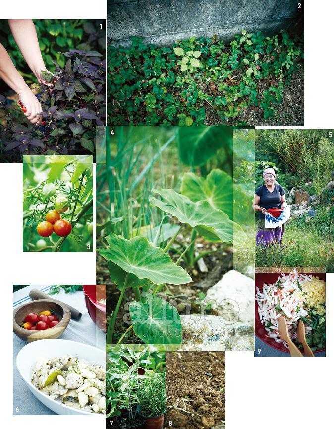 1. 무성하게 자란 차조기잎.일본 깻잎, 혹은 '시소'라는이름으로도 알려져 있다.2. 담벼락을 따라 자란 딸기.여름이면 빨간 열매가 줄을이룬다. 3. 붉게 익어가는방울토마토의 생명력.4. 토란은 추석에 캐서토란국을 끓일 예정이다.5. 요리연구가이자 2년차 농부인 차유진. 6. 진한풍미를 자랑한 허브 치킨 소테. 7. 화분에서 자라고있는 세이지와 로즈마리. 8. 파종을 앞두고, 차유진은곱게 흙을 갈았다. 9. 게맛살을 넣어 식감을 살린마요네즈 샐러드.