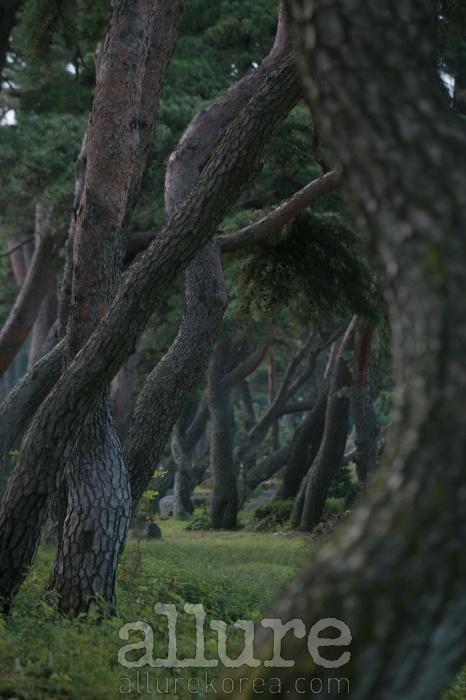 이천 송말숲송말숲은 토착신앙과 풍수, 유교 등의 전통문화가 녹아 있는 인공림이다.두 아름이 넘을 듯한 느티나무 거목들이 줄지어 늘어선 숲 속은어둑했다. 숲을 지나면 진짜 봄이, 새로운 세계가 나타날 것만 같았다.- 조남룡(사진가)