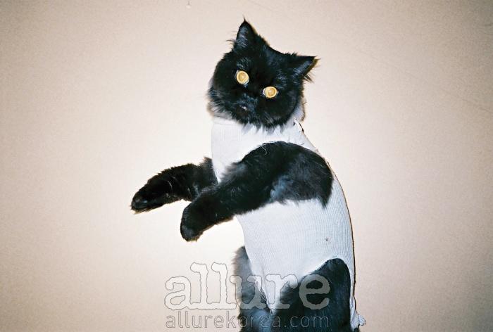 친구랑 같이 살게 되면서 덩달아 함께살게 된 고양이 코코는 나의 발 냄새를좋아하고 나는 그의 말랑한 발바닥을좋아한다. 많이 아팠던 그가 마취에서깨어났을 때, 반가운 마음에 사진을찍었다. 오래오래 같이 살자던 내 말은아마 못 알아들었을 거다. - 황혜정
