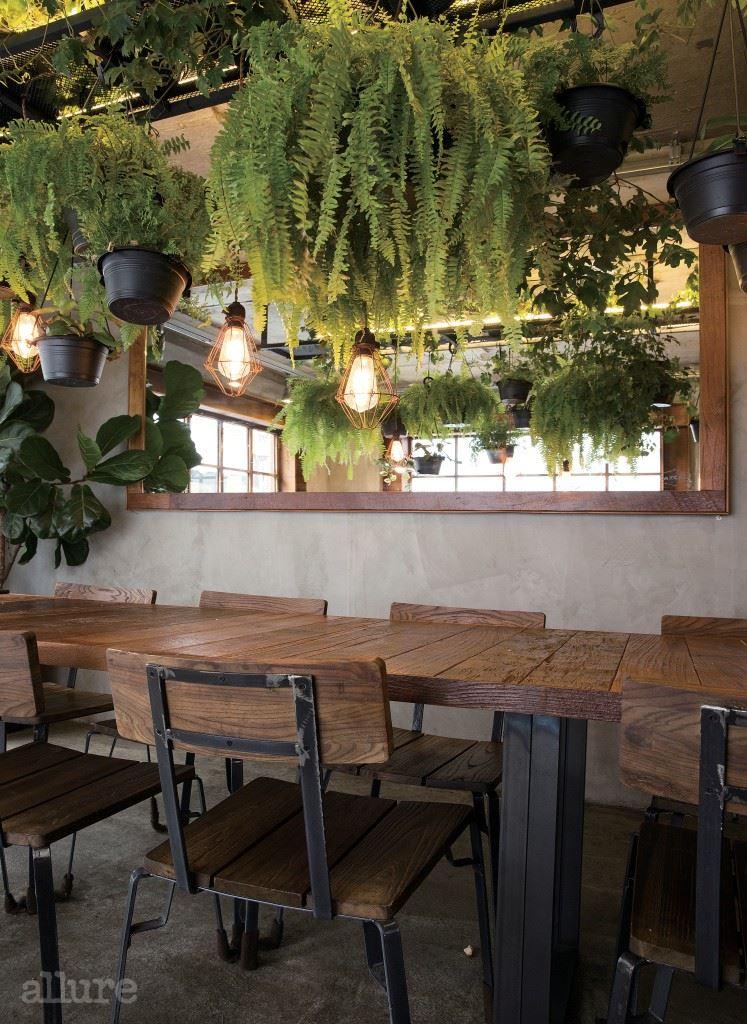 #1 행잉 플랜트 존 조성  벽이나 천장에 매달아 기르는 식물은 위치를 옮기는  게 쉽지 않아 햇빛이나 통풍에 더욱 신경 써야 한다 .  라페름에서는 행잉 플랜트들이 고루 빛을 받을 수 있도록  주기적으로 위치를 옮기고 통풍에도 신경을 많이 쓴다 .  행잉 플랜트로는 잎이 늘어지는 성향이 있는 고사리나  립살리스 종류를 추천한다