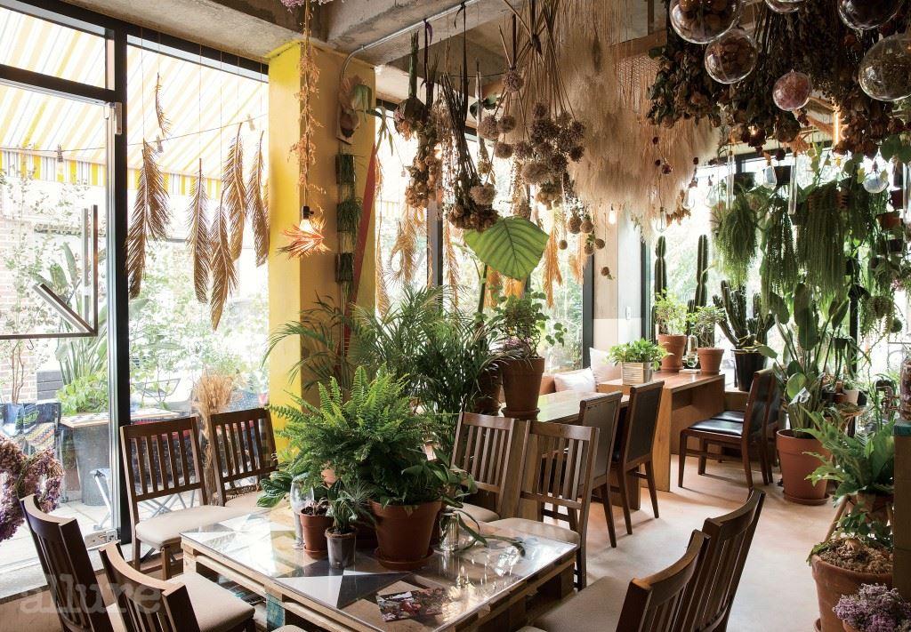 투박한 디자인의 가구와 다양한 형태의 식물이  자유분방하게 어우러진다 .