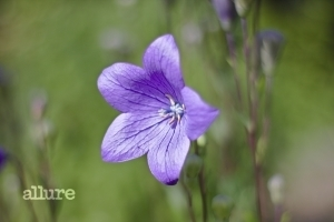 flower-1526003_1920