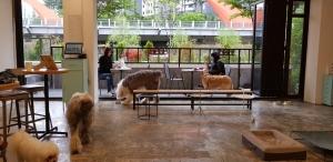 산책길과 연결된 카페의 '댕댕이 라운지'